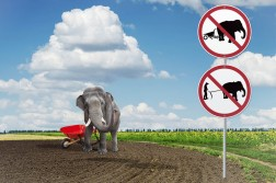 I know it's tempting but don't use an elephant to plow your field.