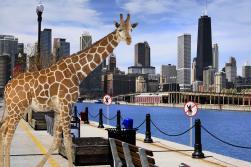 No fishing off a giraffe.