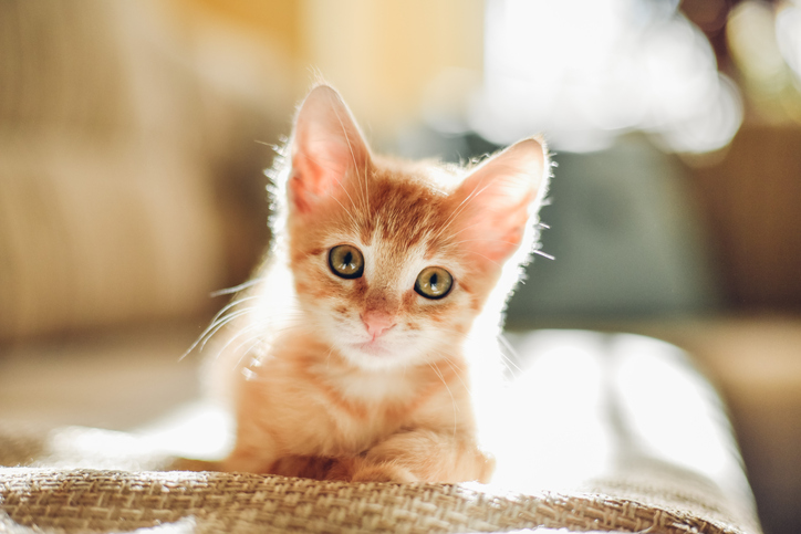 Cute kitten makes a surprise appearance in this post.
